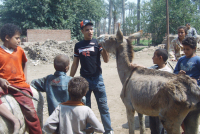 Volunteer Work Egypt: Society for Protection of Animal Rights in Egypt