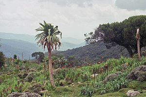 This image of the Bale Mountains is licensed under the Creative Commons Attribution-Share Alike 2.0 Generic license