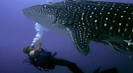 Volunteer Work Kenya: East African Whale Shark Trust